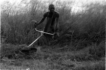 A council worker cutting overgrown grass among graves with his 'bread cutter'