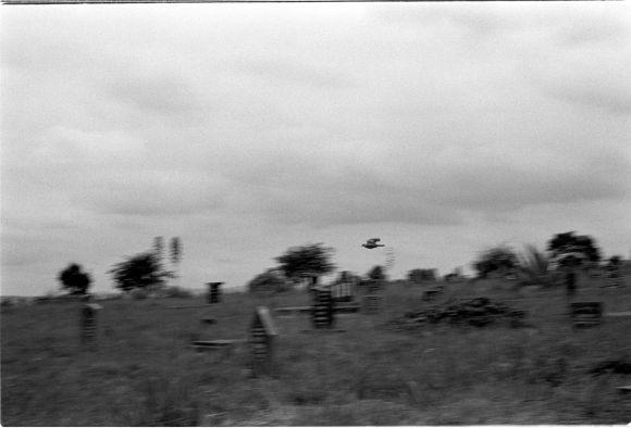 A lone bird flies over the still grave yard.