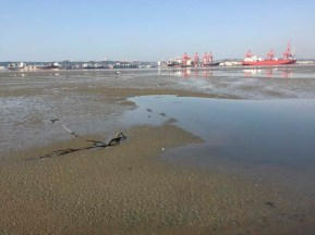 During COVID-19, mud flats in Durban harbour.