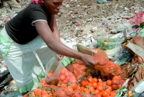 A woman sorts through discarded fruit, collecting tomatoes for her family's next meal.